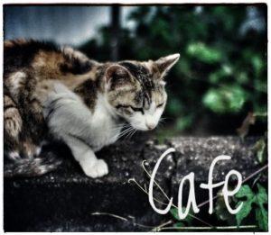 猫カフェの値段相場って?おすすめ時間帯の猫が元気な時間はいつ?2