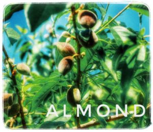 アーモンドを生で食べる食べ方とは!栄養には亜鉛も?保存は冷凍?1